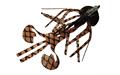Gulf Bug #06