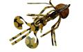 Gulf Bug #07