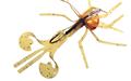 Gulf Bug #13